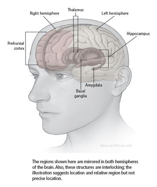areas of the brain that neurofeedback trains for depression